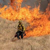 Daily Wildfire Update
